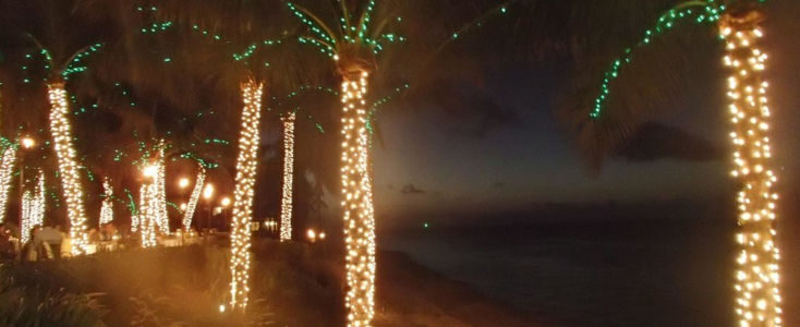 Holidays in Key West - Palm Trees