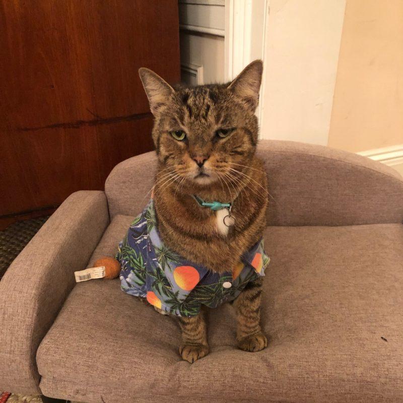 Key West cat